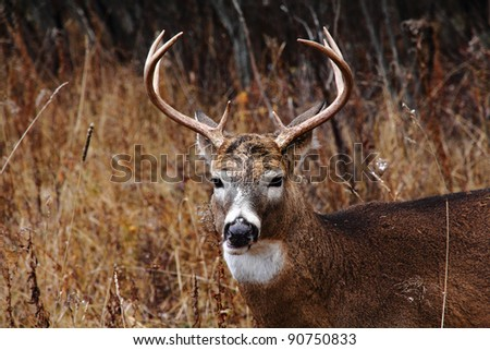 A white-tailed male deer in an autumn forest - stock photo