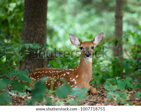 Whitetail Stock Images, Royalty-Free Images & Vectors | Shutterstock