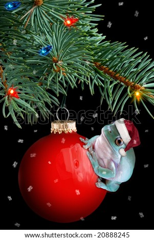 A whites tree frog is sitting on a christmas ornament under the tree. - stock photo
