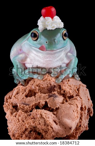 A whites tree frog is sitting on chocolate ice cream and he has whip cream and a cherry on his head. - stock photo