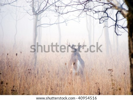 A whitetail deer buck walking into the woods in early morning fog. - stock photo