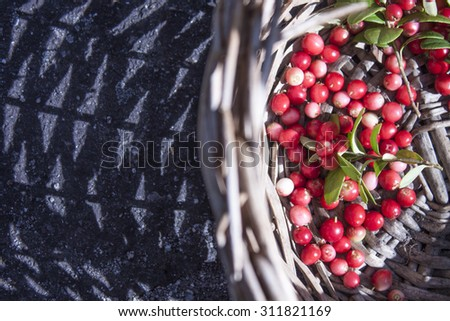 A wicker basket full of Lingonberry Vaccinium vitis-idaea, in the forrest - stock photo
