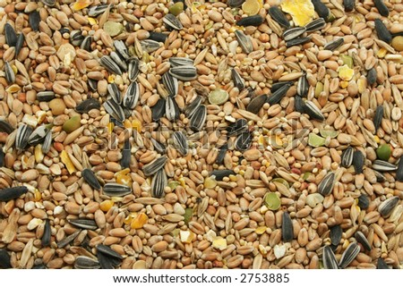 a wide selection of grains, grasses and pulses, dried and mixed - designed for wild birds - stock photo