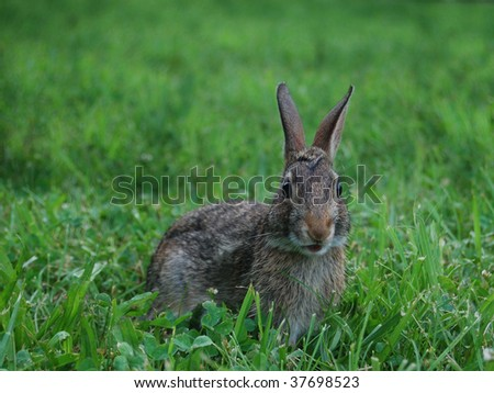 A wild bunny with a surprised look on his face - stock photo