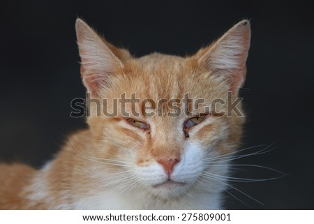 A Wild Feral Cat Looking Sad Hoping to be Fed - stock photo