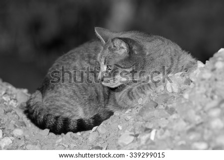 A Wild Feral Cat Resting on a Pile of Rocks - stock photo