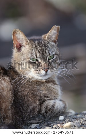 A Wild Feral Cat Sleeping Outside on a Pile of Rocks - stock photo
