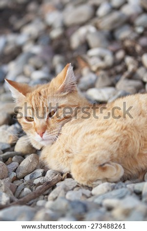A Wild Homeless Cat Sleeping Outside on the Warm Rocks - stock photo