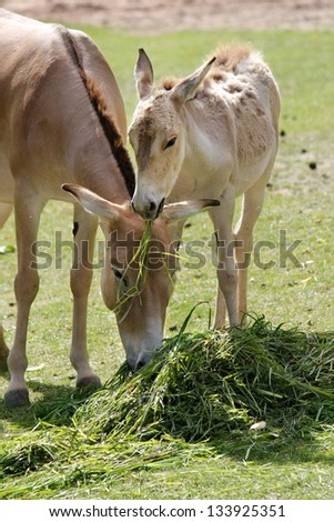 a wild horse eat with your child the grass - stock photo