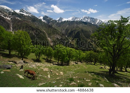 A wild horse grazing in a valley between the Himalayas in Kashmir. - stock photo