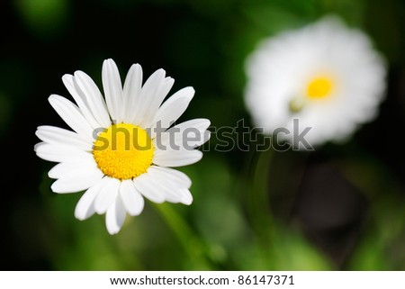 A wildflower with white petals against the green forest floor. - stock photo
