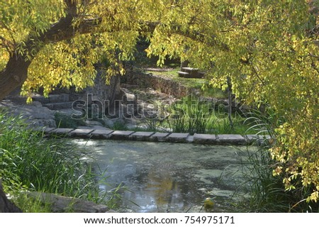 A willow tree in the sun near a pond
