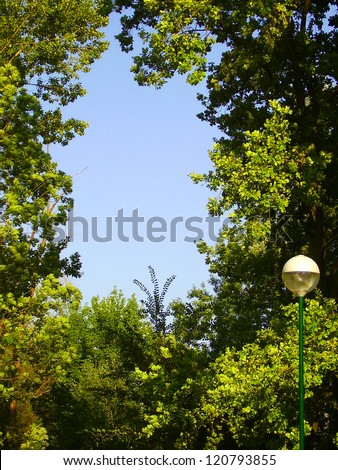 A window towards the sky Trees and bushes are forming a window towards the sky. - stock photo