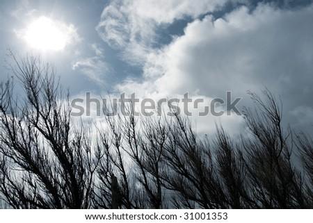a windswept row of trees on the coast of ireland - stock photo