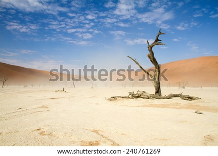 A windy Sossusvlei desert, Namibia - stock photo