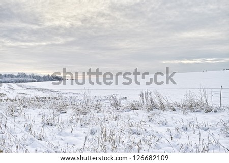 A winter landscape photo - trees, sky and snow - stock photo