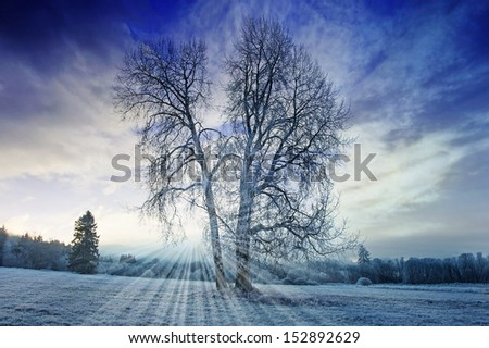 a winter morning with a beautiful sunrise - stock photo