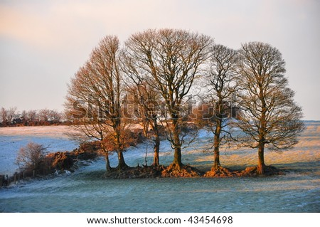 A Winter scene of Sun shining on winter trees after a snow fall - stock photo