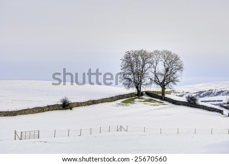 A Winter scene of two trees in the corner of a field bounded by two drystone walls