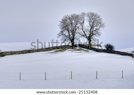 A Winter scene of two trees in the corner of a field bounded by two drystone walls and a barbed wire fence