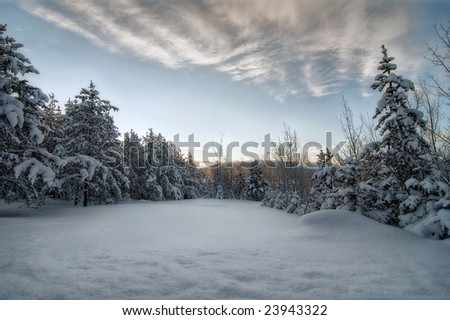 A winter sunset over the forest - stock photo