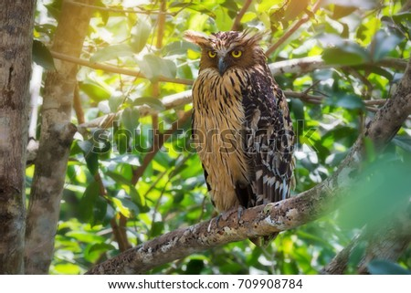 Wise Owl Perching Looking Photographersunlight Background Stock