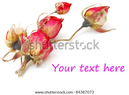 A withered rose frame - stock photo