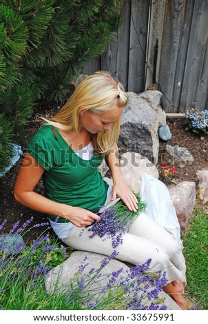 A woman cutting lavender - stock photo