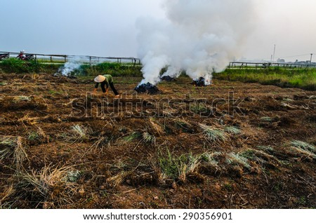 A woman farmer burning rice traw after harvest time in Vietnam - stock photo