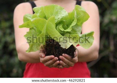 A woman holding freshly harvested lettuce - stock photo
