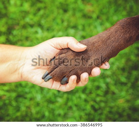 a woman holding the paw of a chocolate labrador retriever outdoor at a park in summer time representing love, friendship, training, companionship, teamwork or other concepts in a natural background