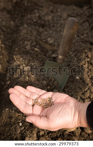 A woman's hand, full of seeds, with earth and a trowel in the background - stock photo