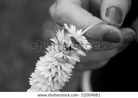 A woman's hand offering a bunch of daisies. - stock photo