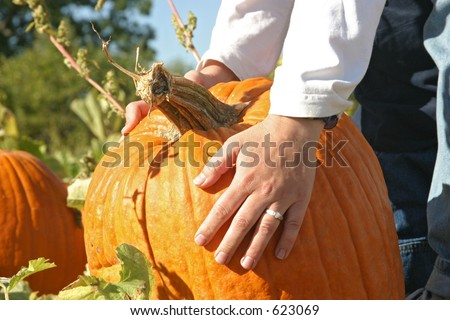 a woman's hand picking a pumpkin - stock photo