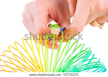 A Woman's hand with a colorful red eyed tree frog on a spring, coil toy. - stock photo