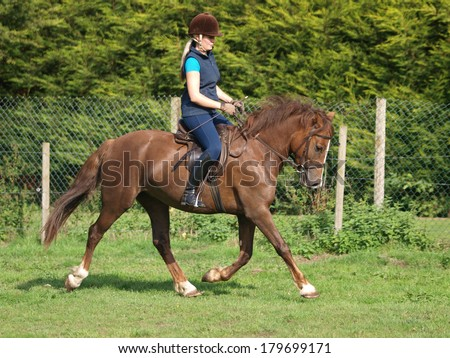 A woman trots a chestnut horse around a paddock.