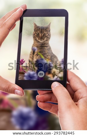 a woman using a smart phone to take a photo of a cute cat outside of a dirty window - stock photo
