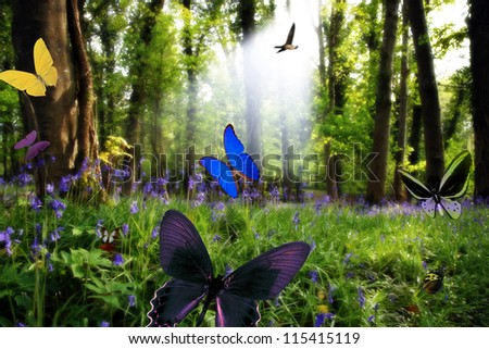 a wood full of bluebells - stock photo