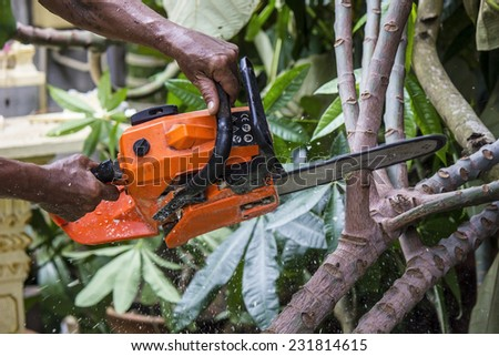 a woodcutter at work in the forest - stock photo