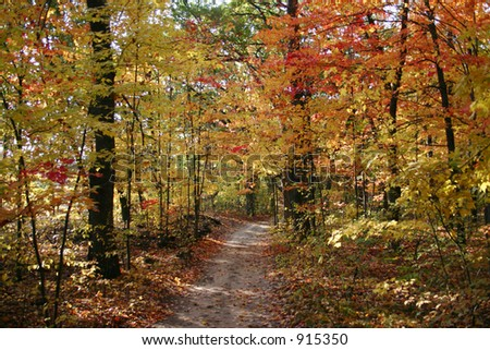 A wooded path in autumn - stock photo