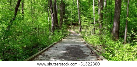 A wooden  bridge over a small stream and swap on a hiking trail through the woods