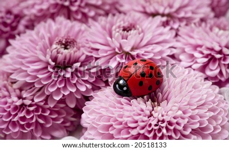 A wooden ladybug on  a pile of pink aster