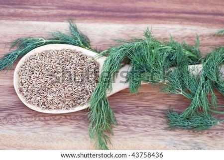 A wooden spoon filled with dill seed and wrapped with dill weed.
