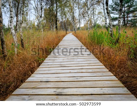 A wooden walkway through the swamp with birch
