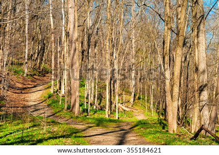 A woodland trail forks into an upper and lower path in early spring - stock photo