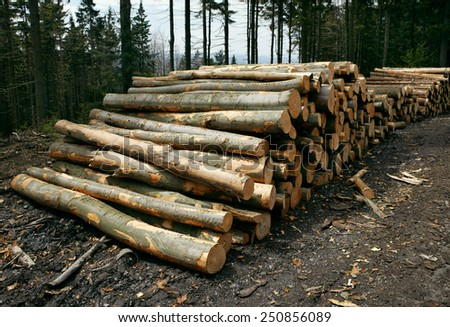 A woodpile of chopped lumber in the forest - stock photo
