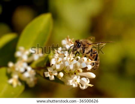 a worker-bee