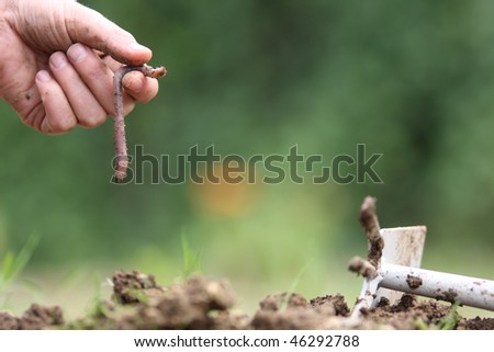 A worm in the garden - stock photo