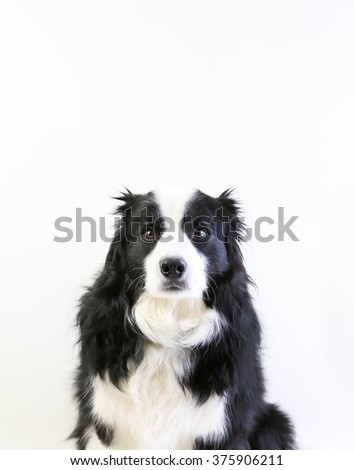 A worried dog looking at the camera isolated on white