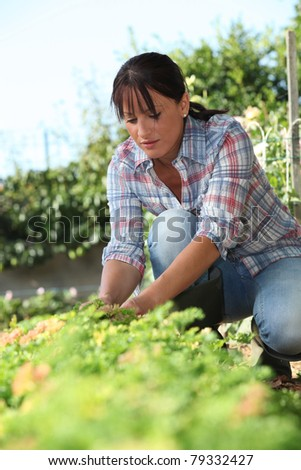 a 30 years old woman lifting a lettuce in a kitchen garden - stock photo
